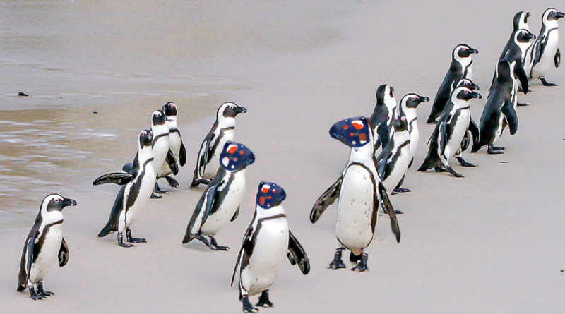 Bionic Penguins Are Leading Real In Military Exercises And The Mindhive Doesnt Know Why